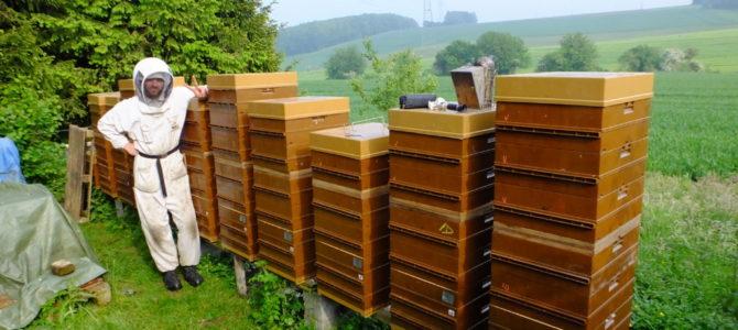Pourquoi des ruches en plastique?