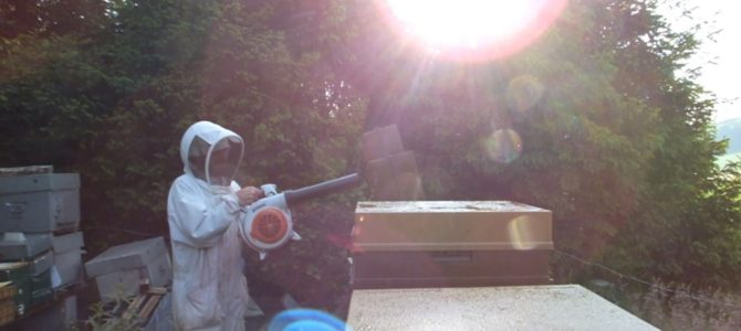 Hygrométrie, chasse-abeilles et retour des hausses
