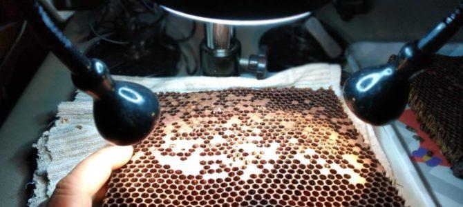 Autopsie d'une ruche morte en hivernage