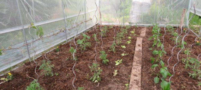 Conserver la fertilité du sol de la serre