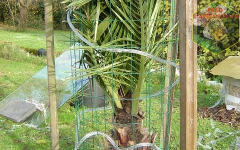 Protection hivernale des plantes frileuses (exotiques et palmiers)