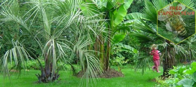 Mon jardin en 2006