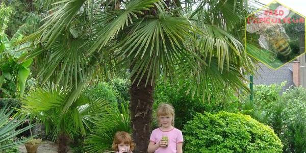 Le jardin exotique de Ariane et Christian Ravijst à Ecaussinnes (B)