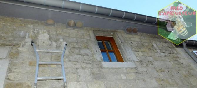 Remise en place des nichoirs à hirondelles de fenêtre