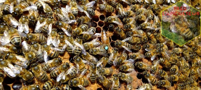 Visite de printemps rapide au rucher
