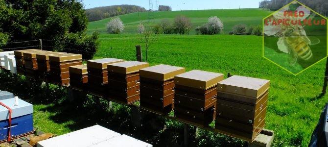 Début de la miellée de printemps