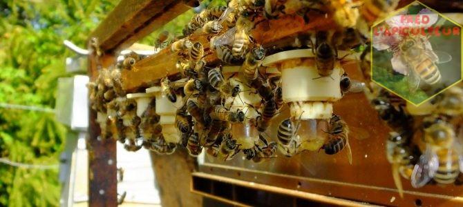 Début de l'élevage de reines au rucher