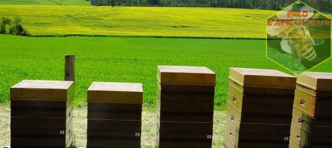 Travaux d'aménagement au rucher (fin) et miellée de colza