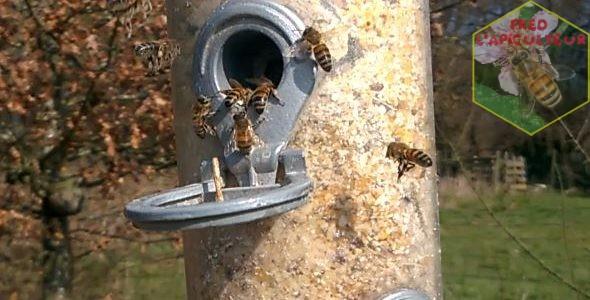 Quand les abeilles se prennent pour des oiseaux!!