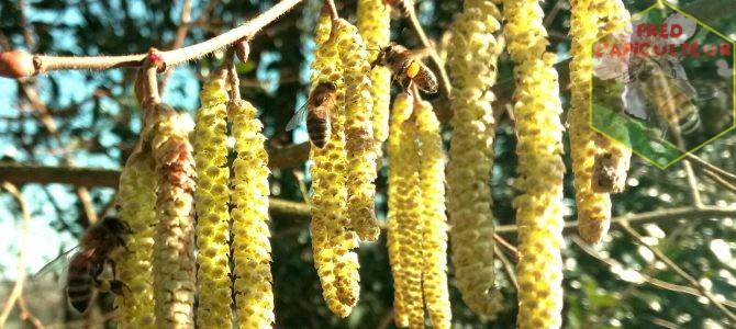 Premiers pollens !
