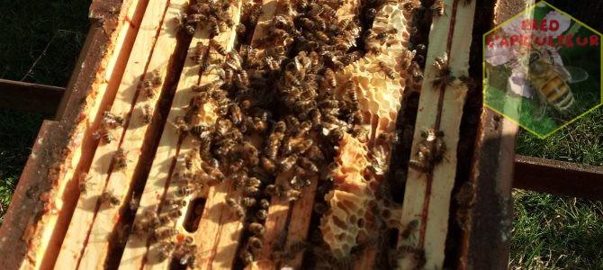 News du rucher, encore 5-6 semaines à tenir…