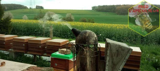 Nouvelles du rucher, miellée et météo…..