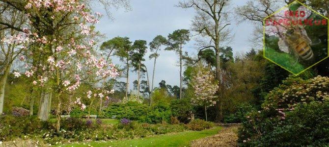 Arboretum de Bokrijk
