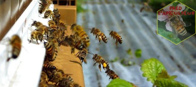 Journée de miellée avant…?