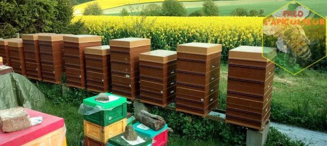 Revirement au rucher !