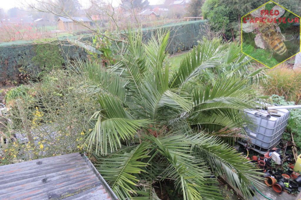 Jubaea et jardin 2020