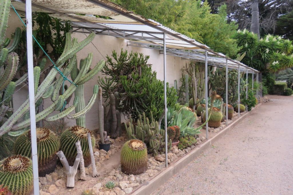 Les Ets. KUENTZ, producteur de cactées et plantes grasses à Fréjus